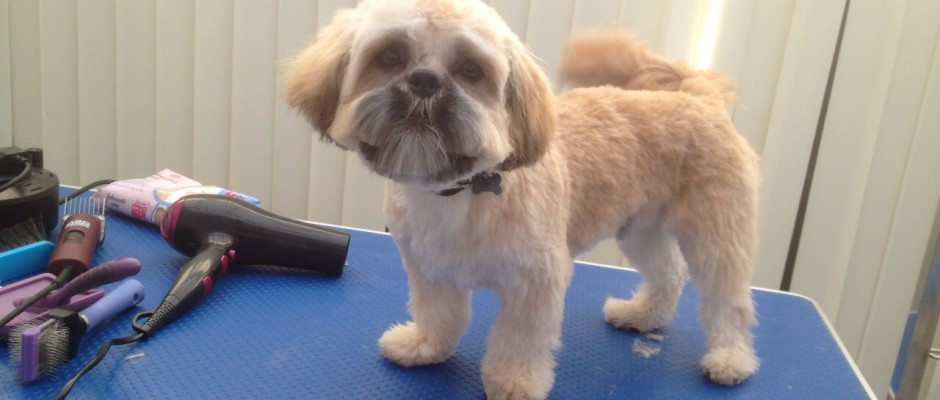 Diploma In Dog Grooming Intensive Course Uk